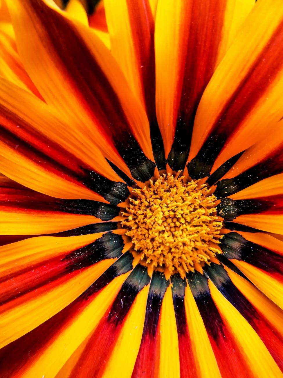 selective focus photo of gerbera flower